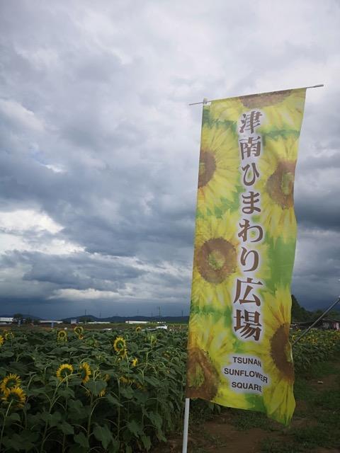 新潟県津南町ひまわり畑写真画像