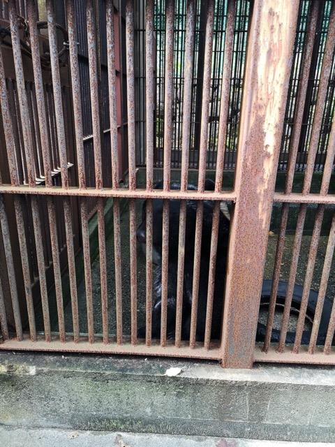 新潟県胎内市樽が橋遊園 熊のくーちゃん画像