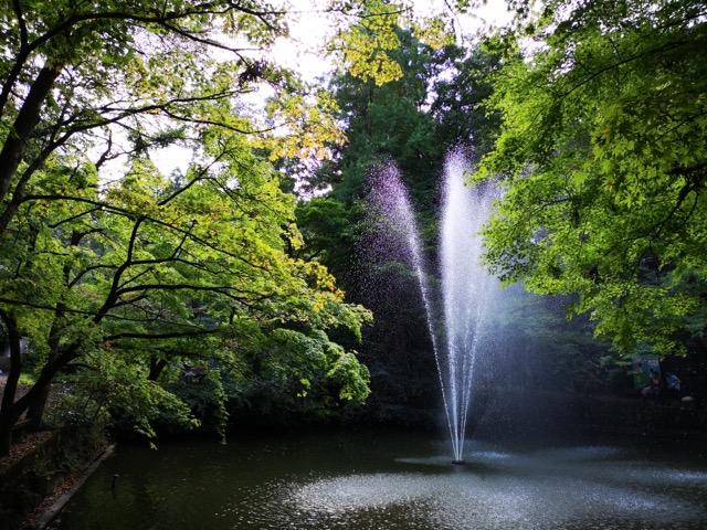 新潟県加茂山公園の紅葉スポットの噴水画像
