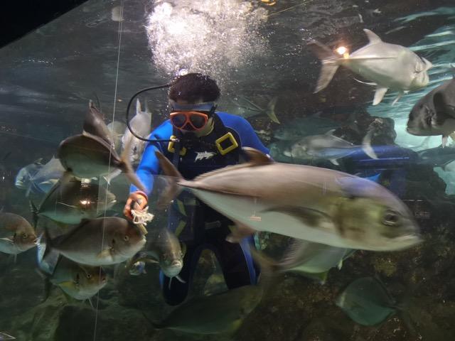 新潟寺泊水族館ダイバーの餌付けショー画像