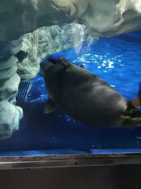 マリンピア日本海 アザラシ画像