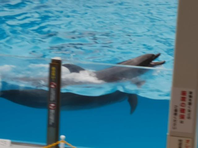 マリンピア日本海 イルカショー画像