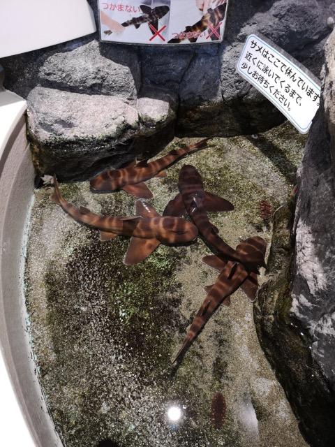 マリンピア日本海のタッチ水槽画像