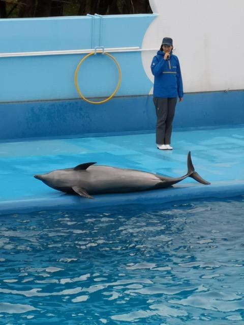 マリンピア日本海 イルカ画像
